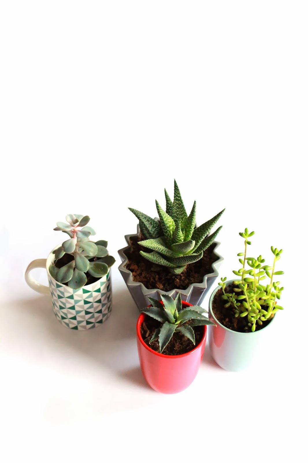 plantes-grasse