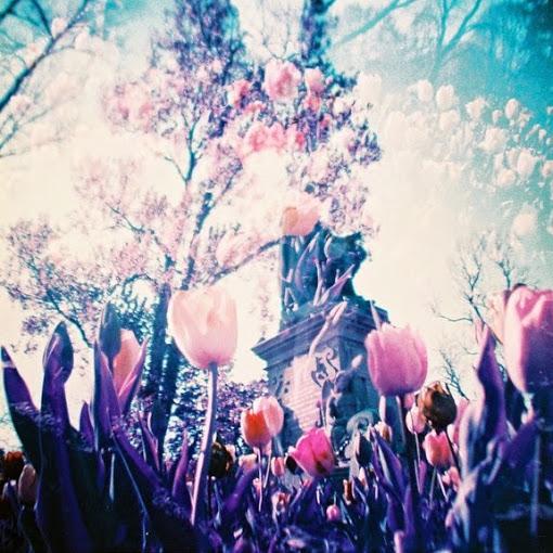 lomography-purple-film-flower2