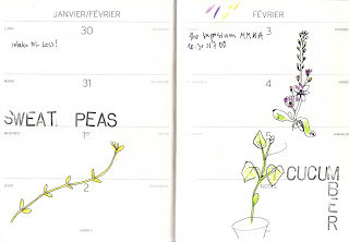 sweet-peas-cucumber
